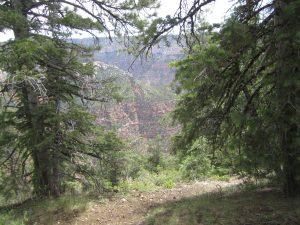 Walking beside the Canyon
