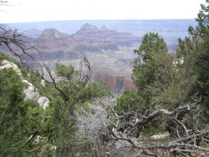 Another view of the North Rim